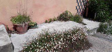 Bonnes ou mauvaises herbes ?