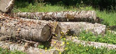 Coupe de bois dans la forêt communale